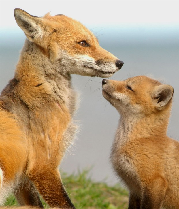 Fox6 060