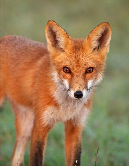 FoxSep 023