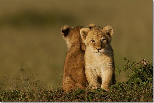 wildlife-animals-7