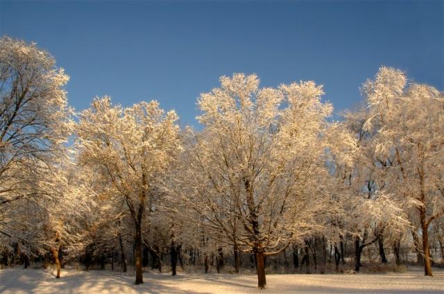 Winter Petsbc 095