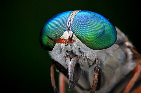 Arch2O-Insects-Macro-Photography-Shikhei-Goh-03-600x399ABC