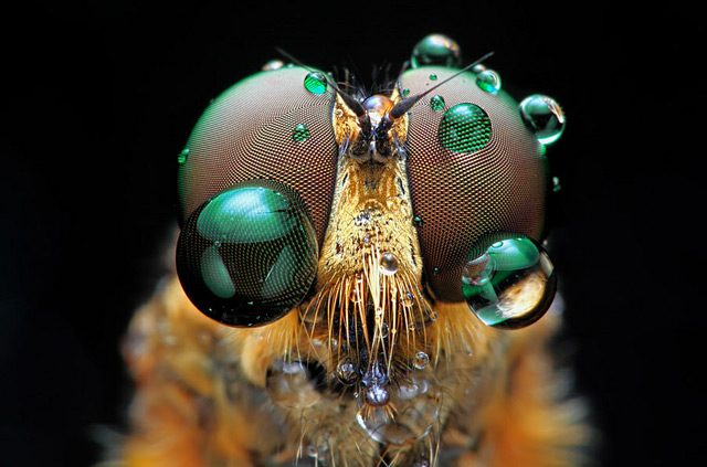 Arch2O-Insects-Macro-Photography-Shikhei-Goh-06