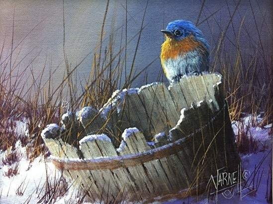 bluebird-on-a-bucket