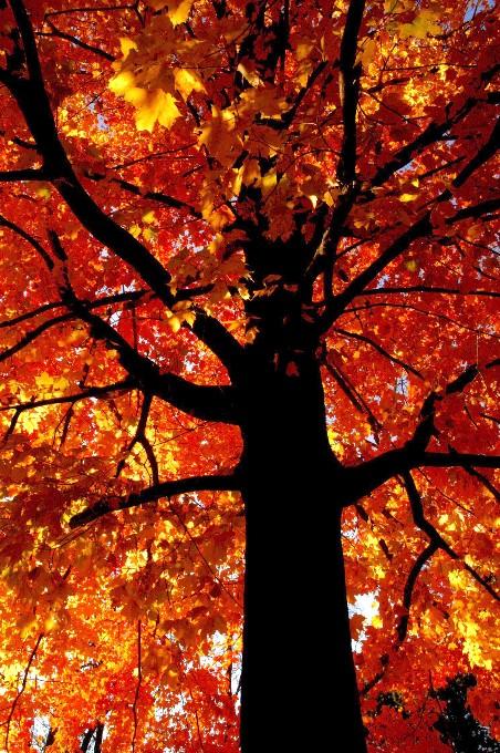 Autumn Pets 040