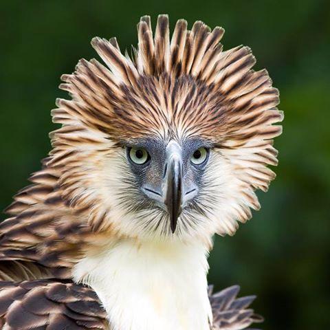 Frans de Waal Philippine Eagle