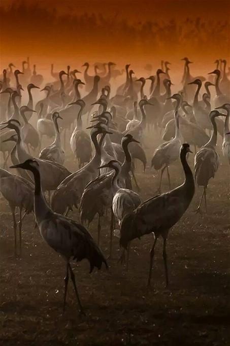 Kathy Rogers cranes