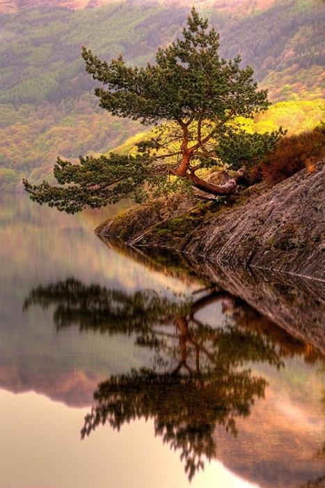 """""""Rowardennan Bonsai"""" – Rowardennan, Loch Lomond, Scotland  by  Karl Williams"""