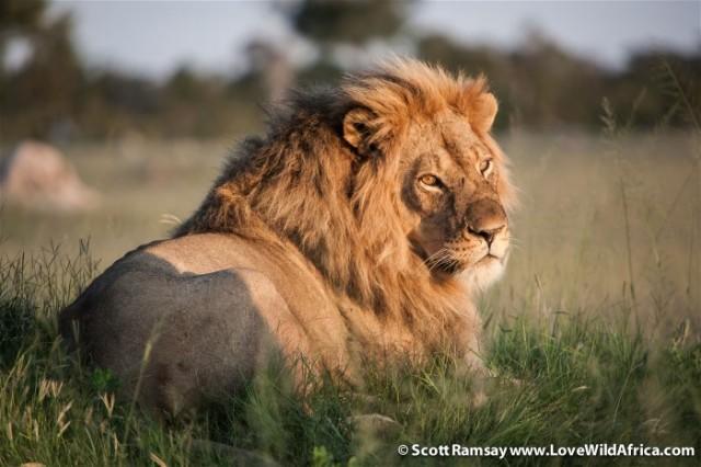 6aHwange-NP-copyright-Scott-Ramsay-www_LoveWildAfrica_com-3