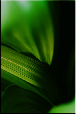 abstract-photography-1-1