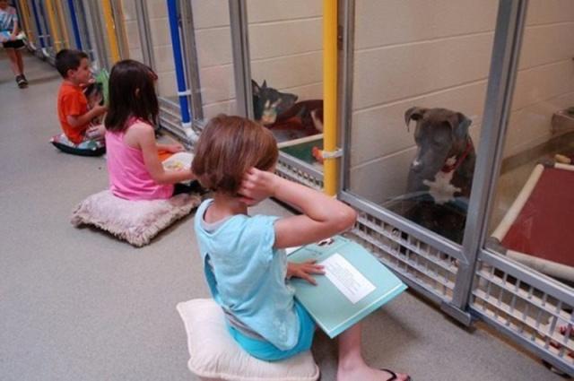 etdxe-kids-animal-shelter