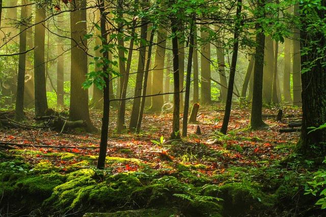 2danstambaugh-forest-light