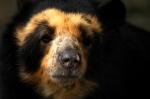 11dlions-bears-tigers-083