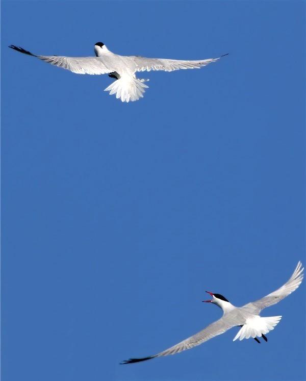 Bonne2birds