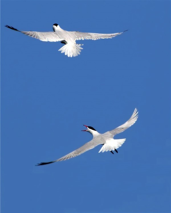 Bonne2birdsb