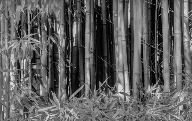 bamboo Ren Lawrence