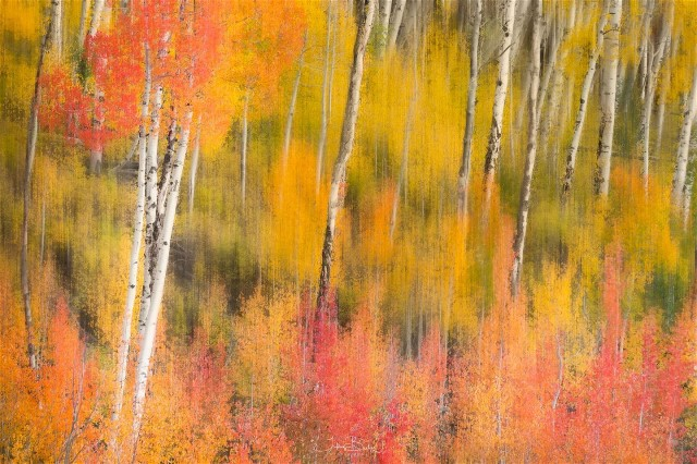 3Autumn in the abtract Tiffany Briley